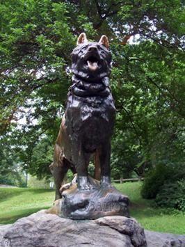 G:\проект про собак\балто.jpg