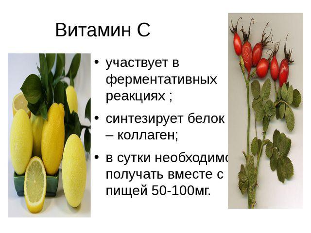 Витамин С участвует в ферментативных реакциях ; синтезирует белок – коллаген;...