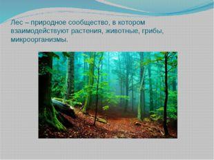 Лес – природное сообщество, в котором взаимодействуют растения, животные, гри