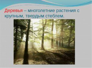 Деревья – многолетние растения с крупным, твердым стеблем.
