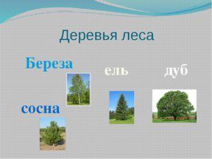 Деревья леса Береза ель сосна дуб