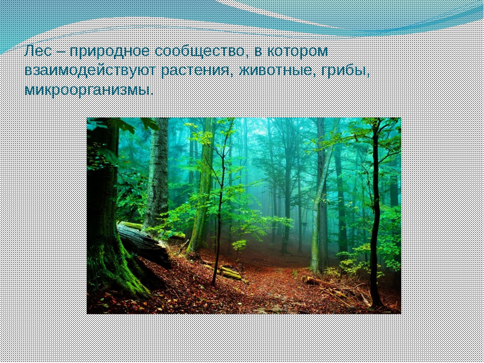 Лес – природное сообщество, в котором взаимодействуют растения, животные, гри...