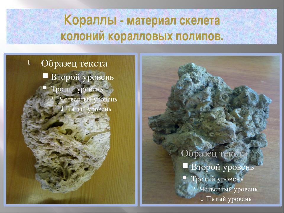 Кораллы - материал скелета колоний коралловых полипов.