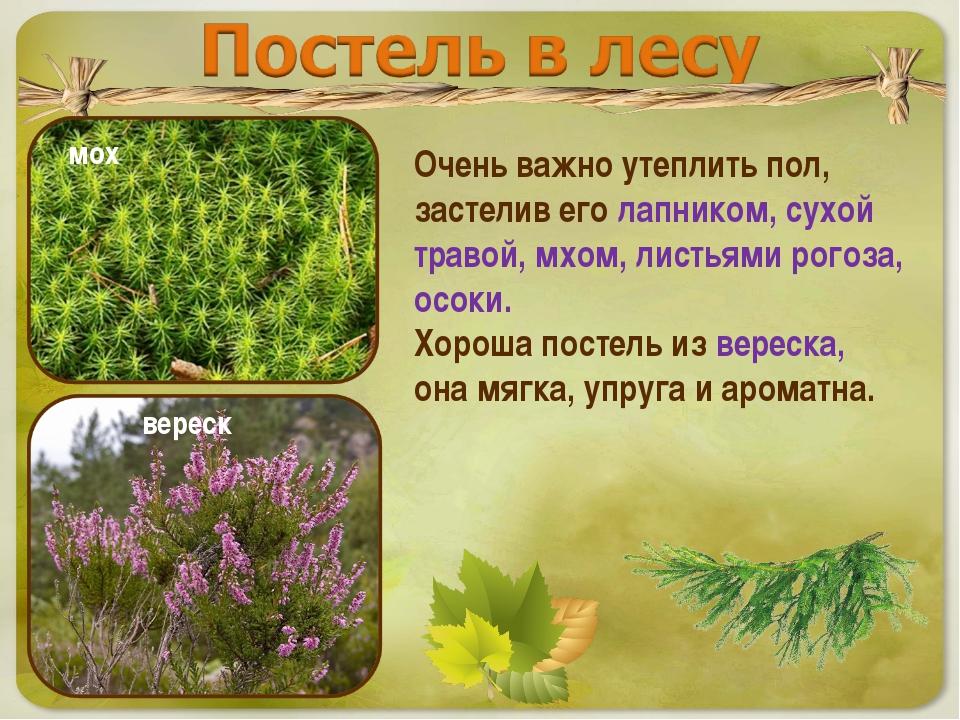 Очень важно утеплить пол, застелив его лапником, сухой травой, мхом, листьями...