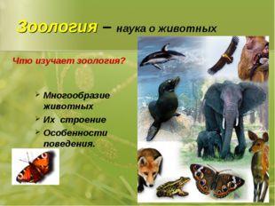 Зоология – наука о животных Многообразие животных Их строение Особенности пов