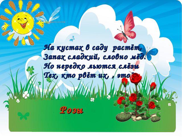 На кустах в саду растёт, Запах сладкий, словно мёд. Но нередко льются слёзы Т...