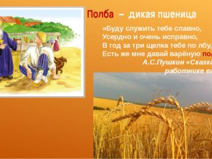 Полба – дикая пшеница «Буду служить тебе славно, Усердно и очень исправно, В