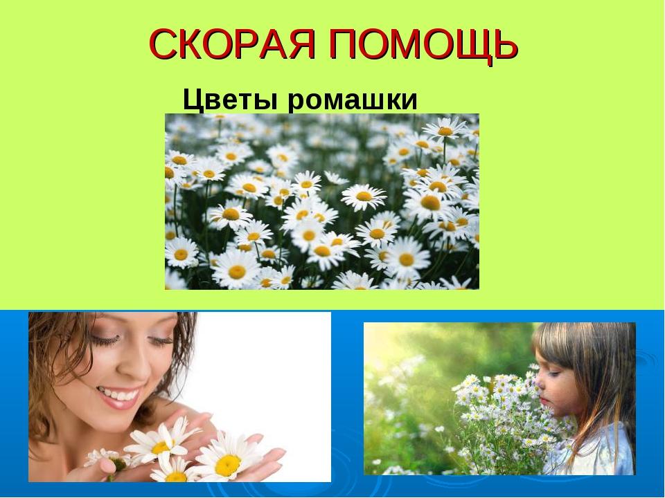СКОРАЯ ПОМОЩЬ Цветы ромашки