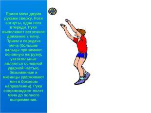Прием мяча двумя руками сверху. Ноги согнуты, одна нога впереди. Руки выполня