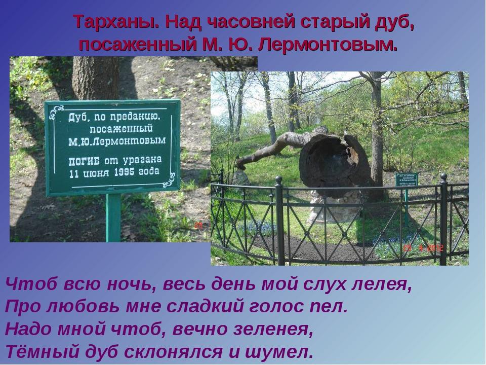 Тарханы. Над часовней старый дуб, посаженный М. Ю. Лермонтовым. Чтоб всю ноч...