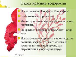 Отдел красные водоросли Представители: Порфира, Филлофора. Глубоководные орга