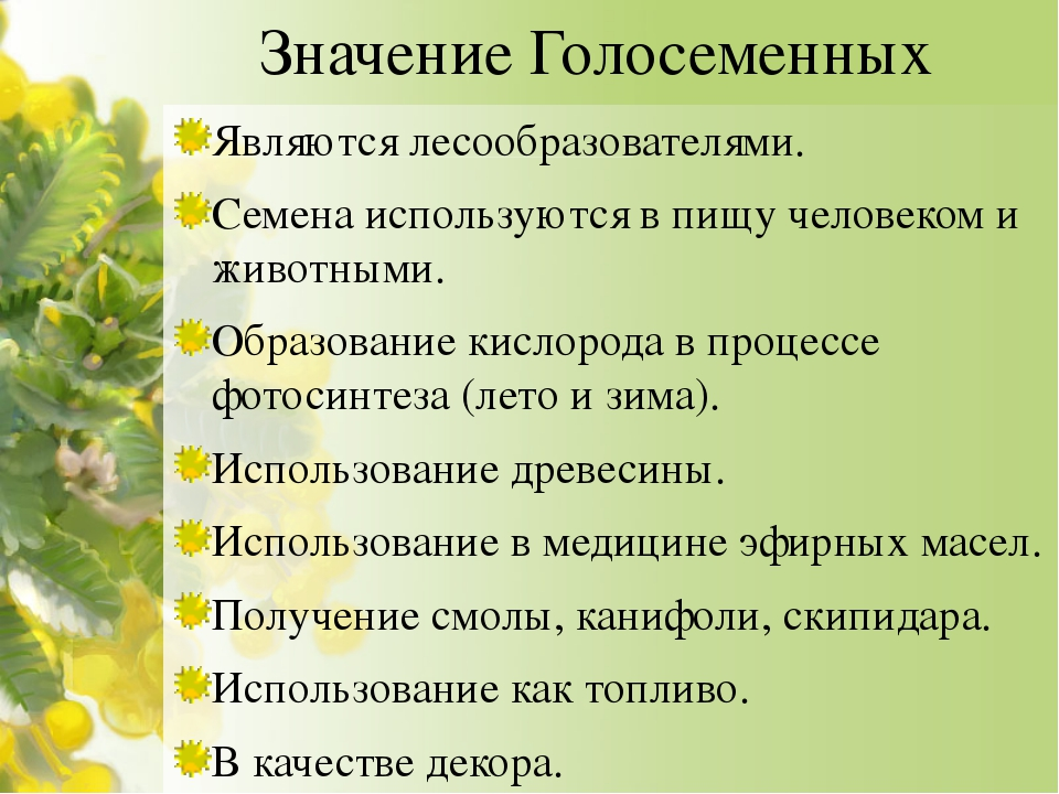 Значение Голосеменных Являются лесообразователями. Семена используются в пищу...