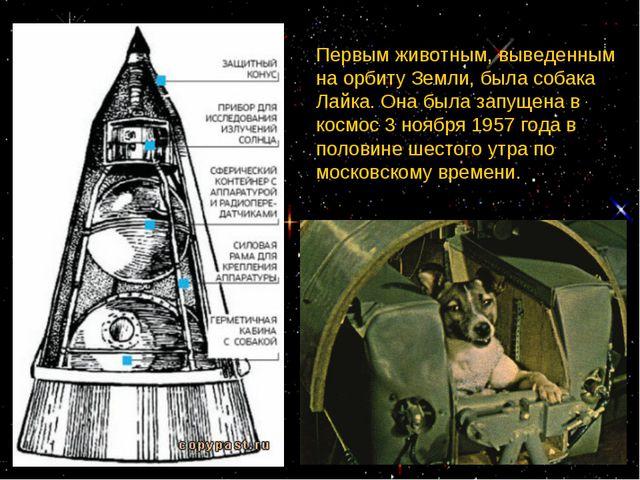 Первым животным, выведенным на орбиту Земли, была собака Лайка. Она была запу...