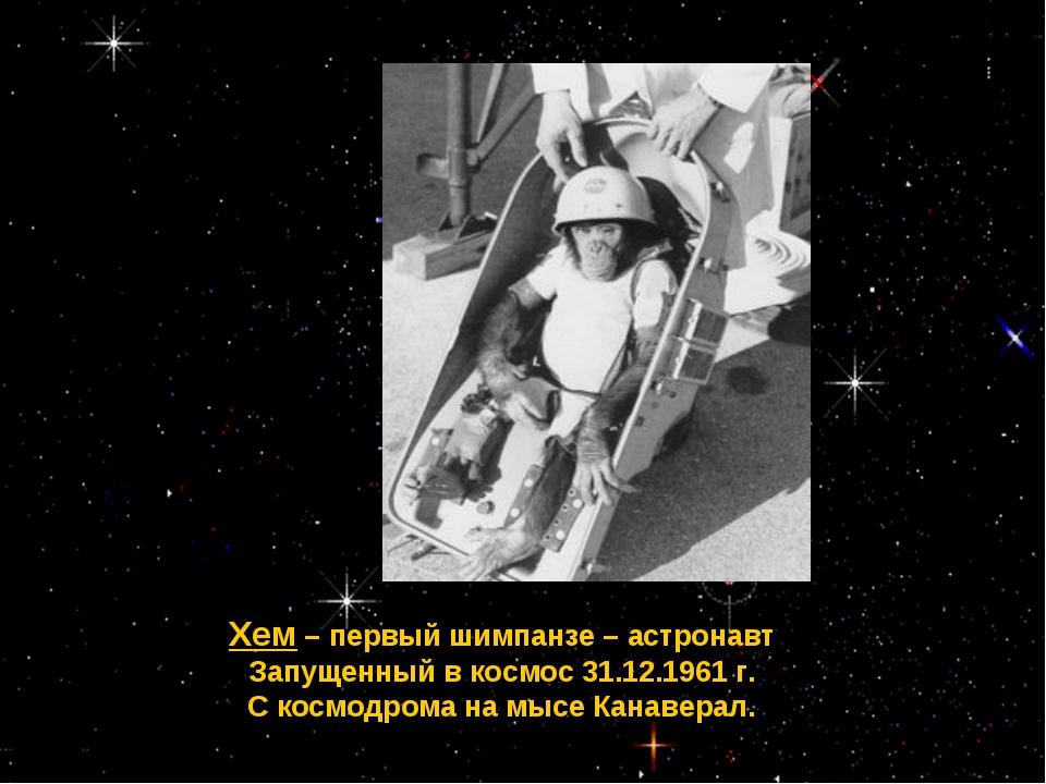 Хем – первый шимпанзе – астронавт Запущенный в космос 31.12.1961 г. С космодр...