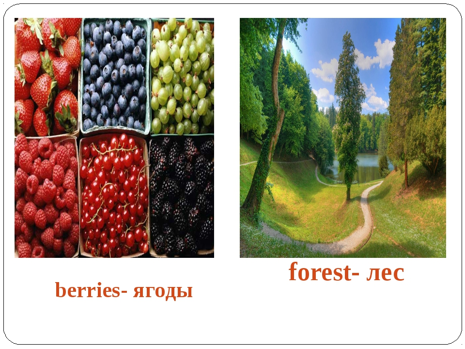 berries- ягоды forest- лес