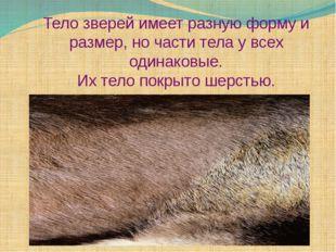 Тело зверей имеет разную форму и размер, но части тела у всех одинаковые. Их