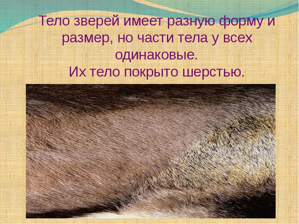 Тело зверей имеет разную форму и размер, но части тела у всех одинаковые. Их...