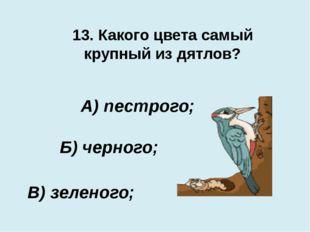 13. Какого цвета самый крупный из дятлов? В) зеленого; А) пестрого; Б) черного;