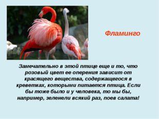 Замечательно в этой птице еще и то, что розовый цвет ее оперения зависит от к