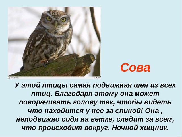 У этой птицы самая подвижная шея из всех птиц. Благодаря этому она может пово...