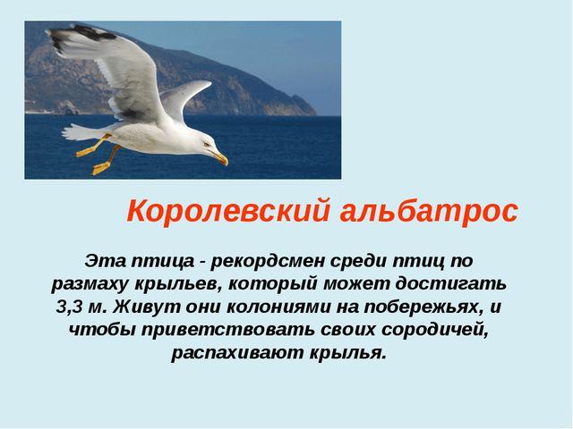 Эта птица - рекордсмен среди птиц по размаху крыльев, который может достигать...