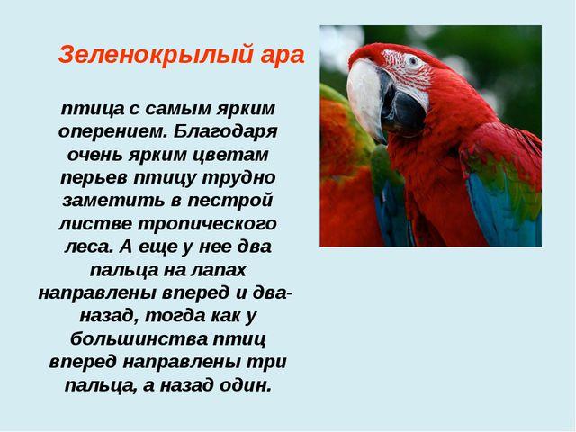 птица с самым ярким оперением. Благодаря очень ярким цветам перьев птицу тру...