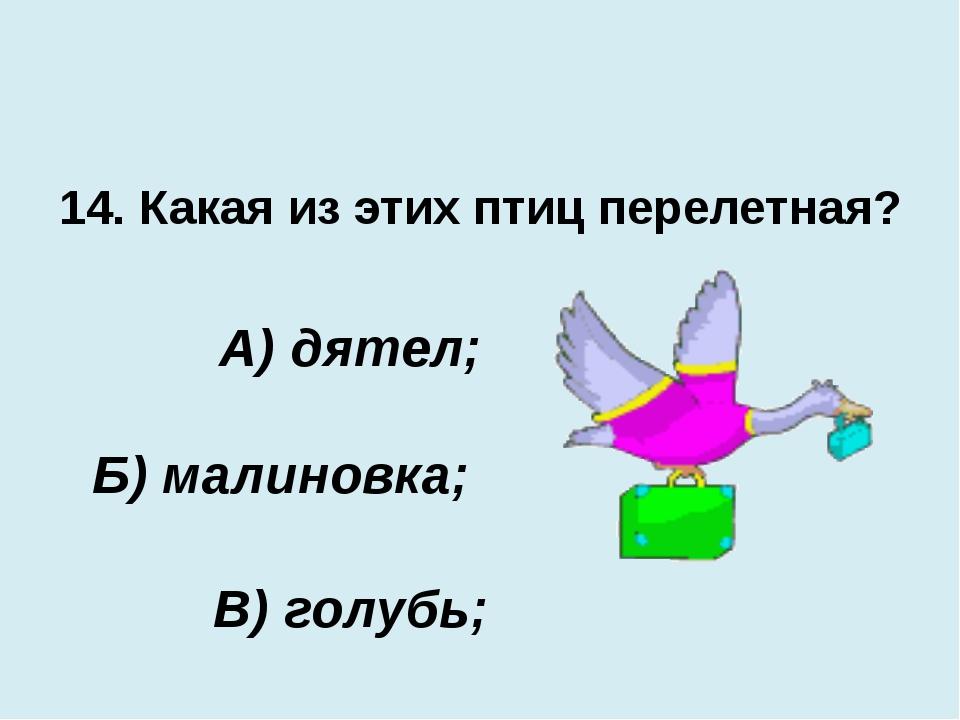 14. Какая из этих птиц перелетная? В) голубь; А) дятел; Б) малиновка;