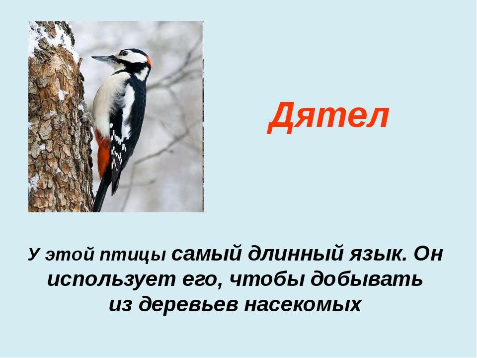 У этой птицы самый длинный язык. Он использует его, чтобы добывать из деревье...