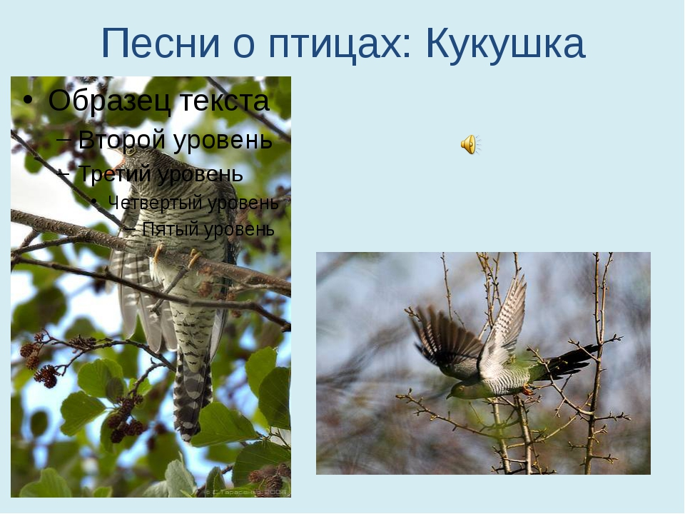 Песни о птицах: Кукушка
