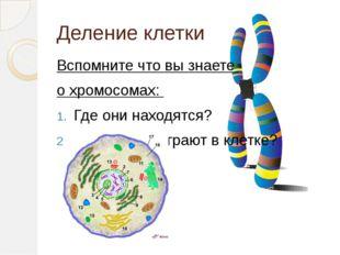 Деление клетки Вспомните что вы знаете о хромосомах: Где они находятся? Какую