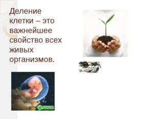 Деление клетки – это важнейшее свойство всех живых организмов.