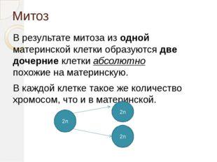 Митоз В результате митоза из одной материнской клетки образуются две дочерние