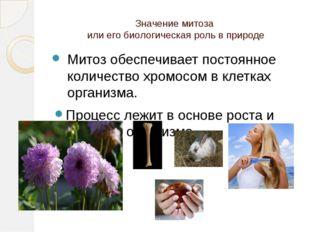 Значение митоза или его биологическая роль в природе Митоз обеспечивает посто
