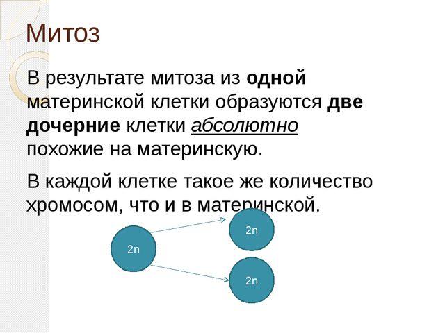 Митоз В результате митоза из одной материнской клетки образуются две дочерние...