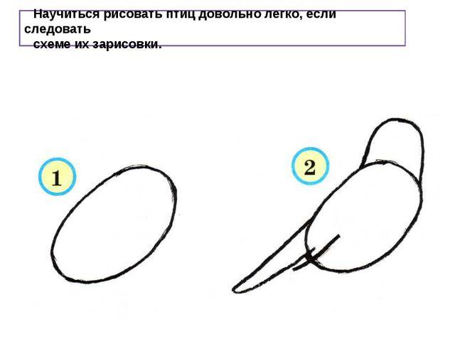 Научиться рисовать птиц довольно легко, если следовать схеме их зарисовки.