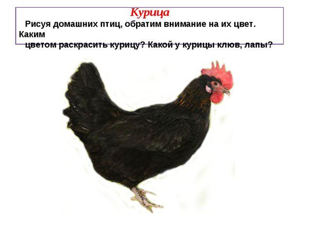 Курица Рисуя домашних птиц, обратим внимание на их цвет. Каким цветом раскра...