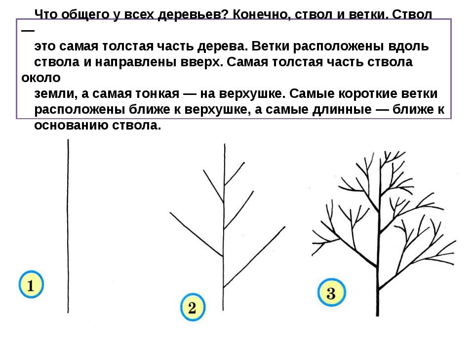Что общего у всех деревьев? Конечно, ствол и ветки. Ствол — это самая толста...