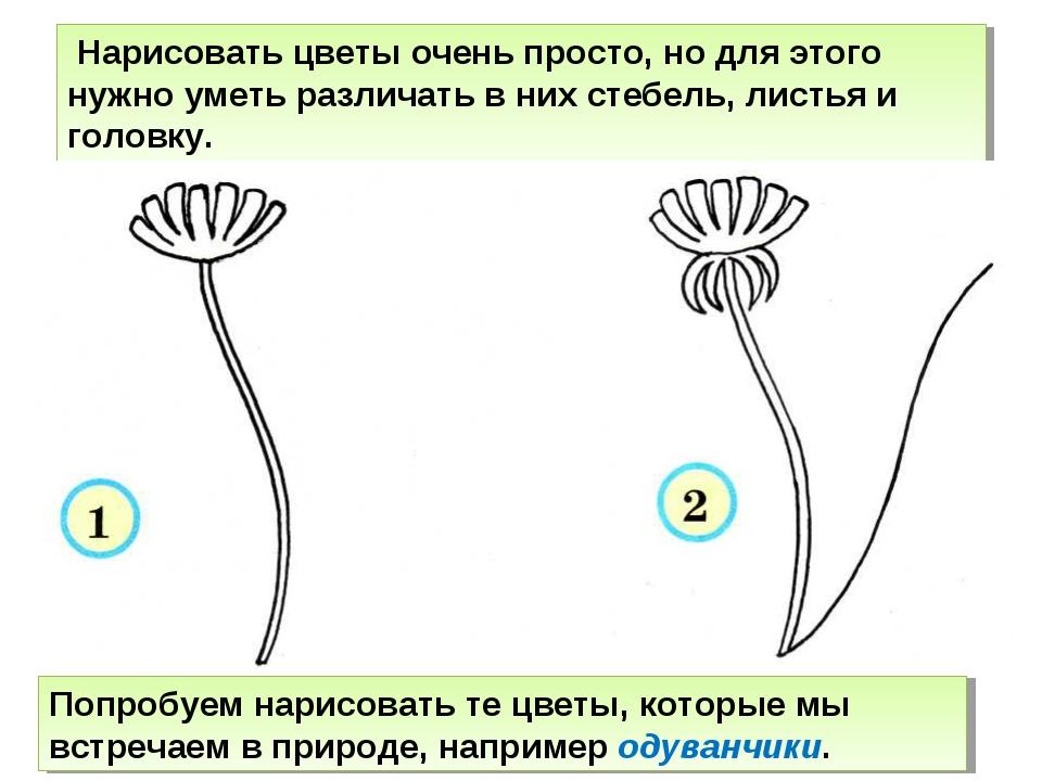 Нарисовать цветы очень просто, но для этого нужно уметь различать в них стеб...