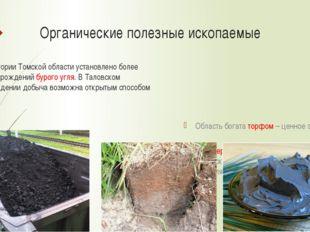 Органические полезные ископаемые На территории Томской области установлено бо