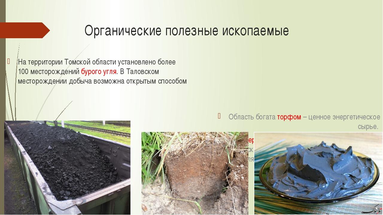 Органические полезные ископаемые На территории Томской области установлено бо...