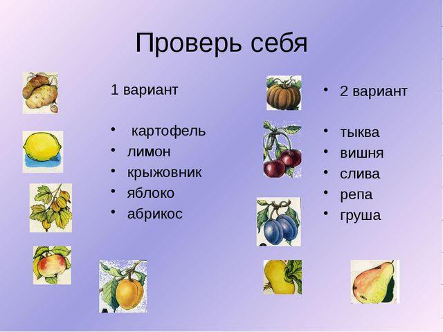 Проверь себя 1 вариант картофель лимон крыжовник яблоко абрикос 2 вариант тык...