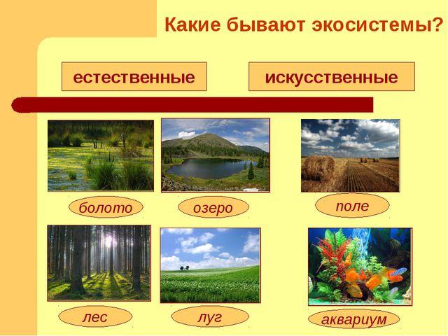 естественные искусственные озеро болото луг лес поле аквариум Какие бывают эк...