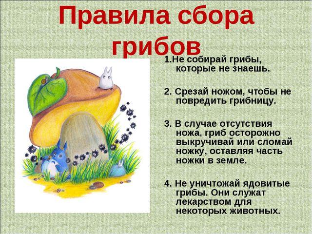 Правила сбора грибов 1.Не собирай грибы, которые не знаешь. 2. Срезай ножом,...