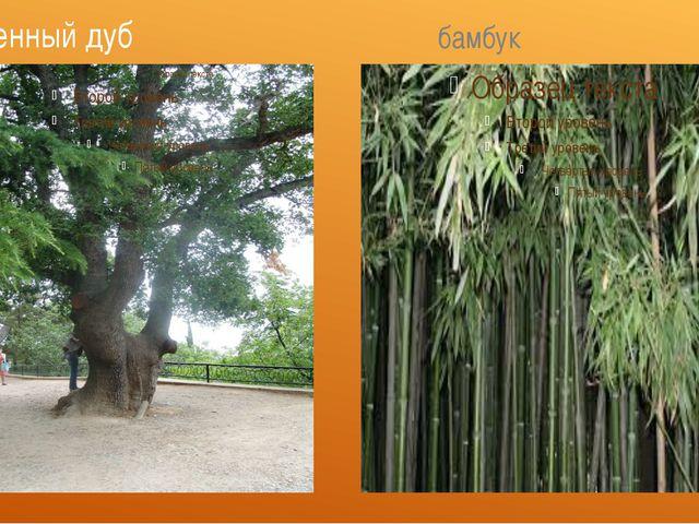 каменный дуб бамбук