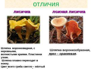 отличия лисичка ложная лисичка Шляпка воронковидная, с неровными, волнистыми