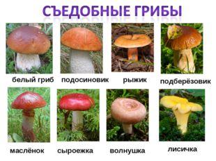 белый гриб лисичка подосиновик рыжик волнушка маслёнок сыроежка подберёзовик