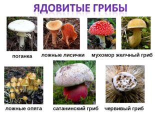 поганка червивый гриб мухомор ложные лисички желчный гриб сатанинский гриб ло