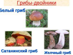 Грибы-двойники Сатанинский гриб Желчный гриб Белый гриб Грибы-двойники