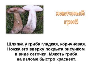 Шляпка у гриба гладкая, коричневая. Ножка его вверху покрыта рисунком в виде