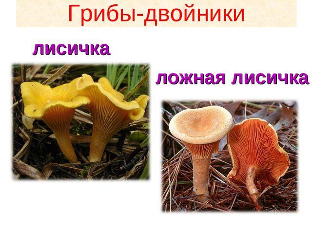 Грибы-двойники лисичка ложная лисичка